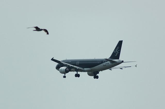 飛行機とカモメ
