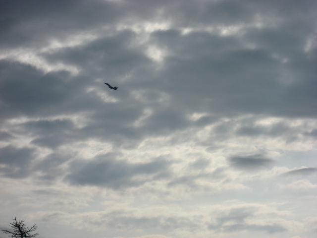 F15 離陸&急上昇