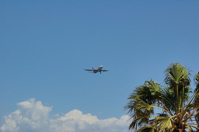 やしの木と雲と飛行機