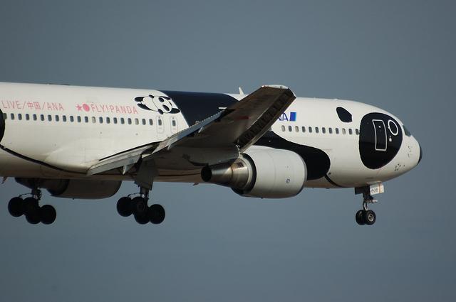 FLY!PANDAのアップ