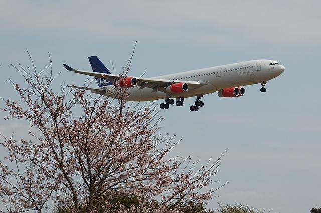 さくらとSASのAirbus A340 1