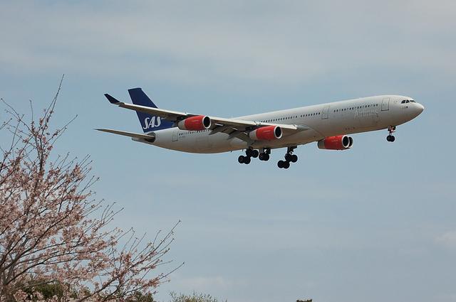 さくらとSASのAirbus A340 2