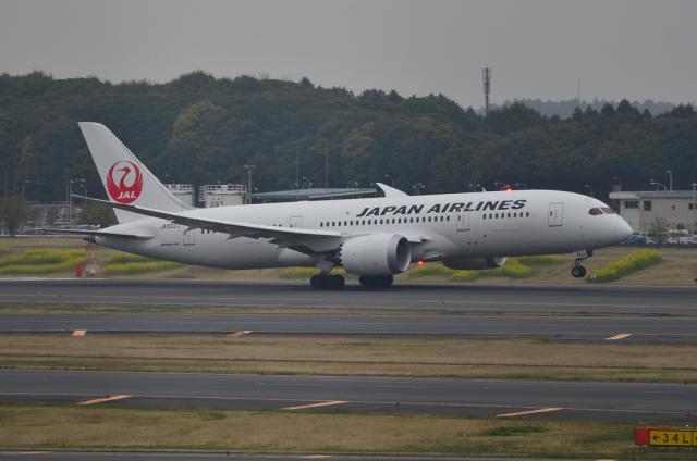 JAL B787 8