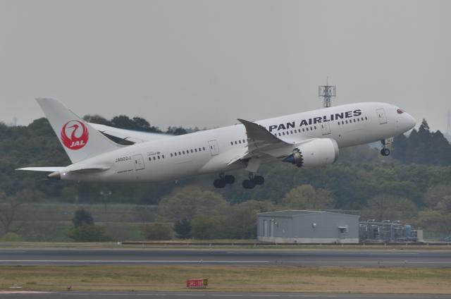 JAL B787 13