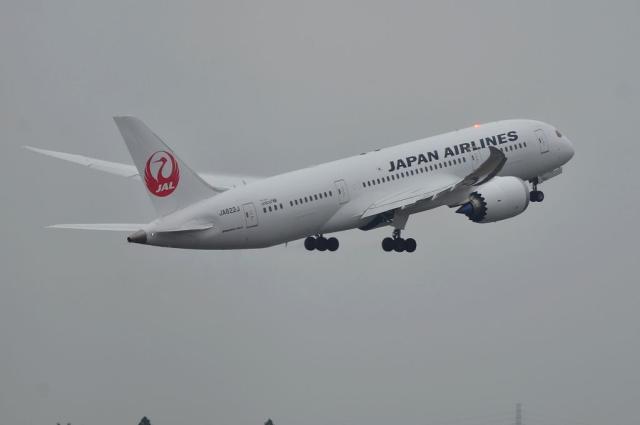 JAL B787 14