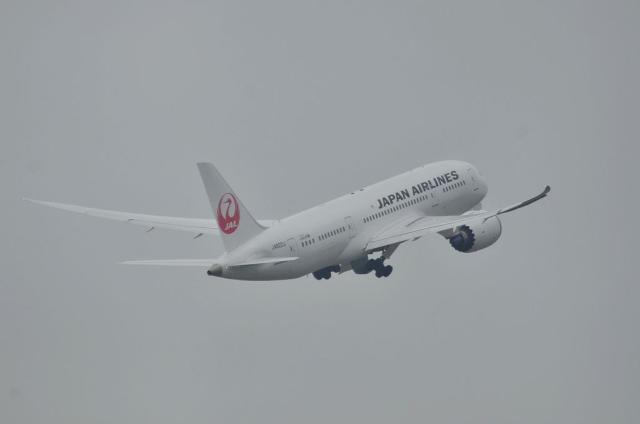 JAL B787 16