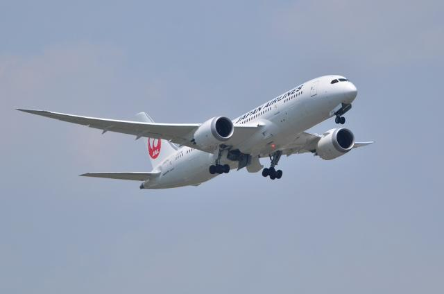 JAL787 5